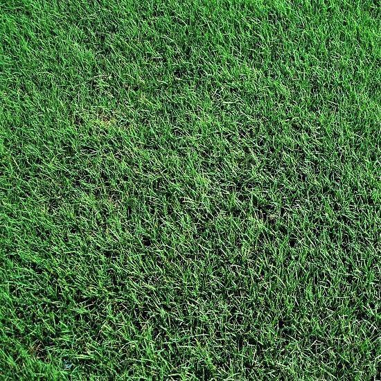 Fort Worth Grass & Stone - Tifway 419 Bermudagrass